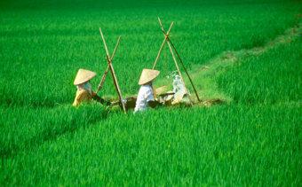 032-az-elet-alapja-a-rizs