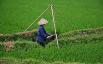 059-a-mezogazdasag-meg-mindig-fontos-szerepet-jatszik-vietnam-eleteben