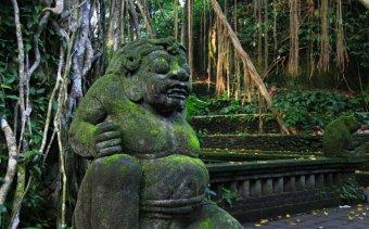 INDONEZIA A Majomerdő mélyén