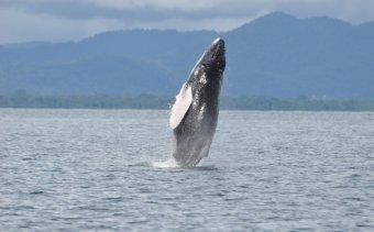 Costa Rica Golfo Dulce