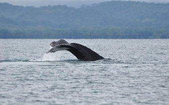 Costa Rica Golfo Dulce2