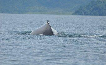 Costa Rica Golfo Dulce3