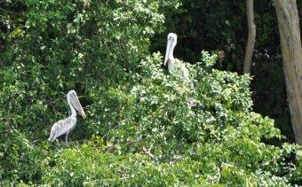 Costa Rica Golfo Dulce4