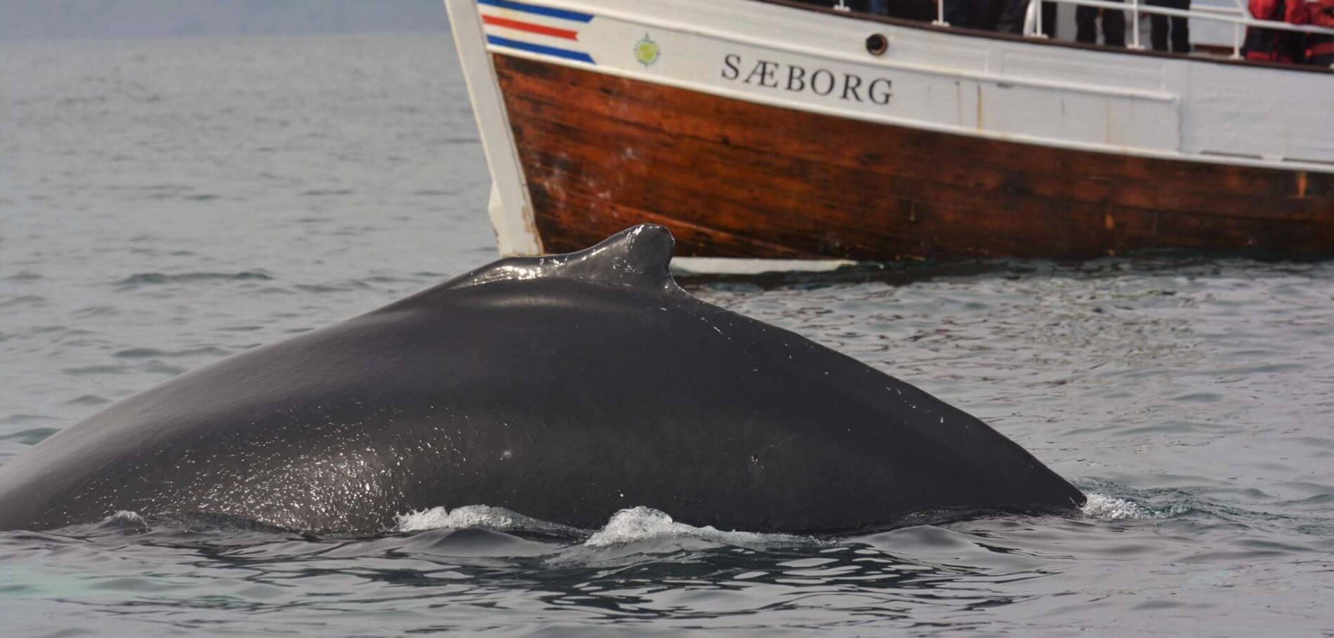 Angkor Tours Izland bálna