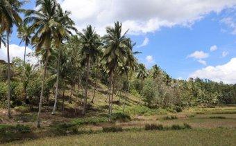 Bohol 2 Fulop-szigetek Angkor Tours