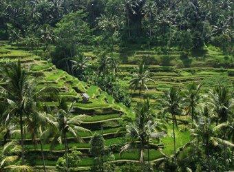 Angkor Tours, Indonézia (13)