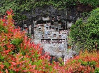 Angkor Tours-Indonézia-Celebesz
