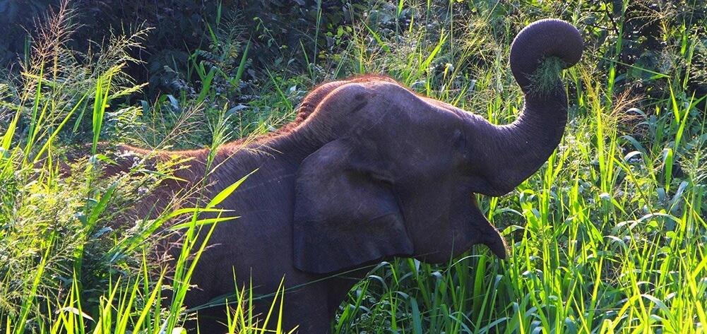 Angkor Tours Sri Lanka elefánt