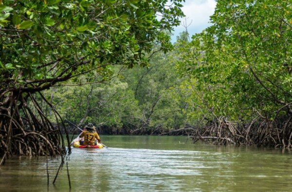 Angkor Tours Szingapúr mangrove